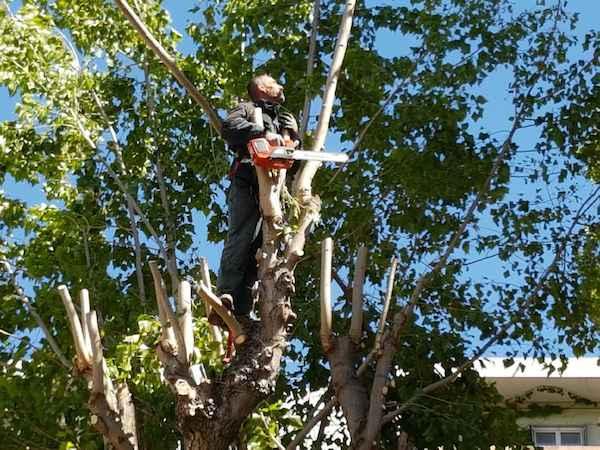 taille des arbres aix en provence