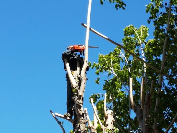 elagage des arbres aix