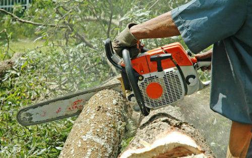 abattage et évacuation des arbres. aix